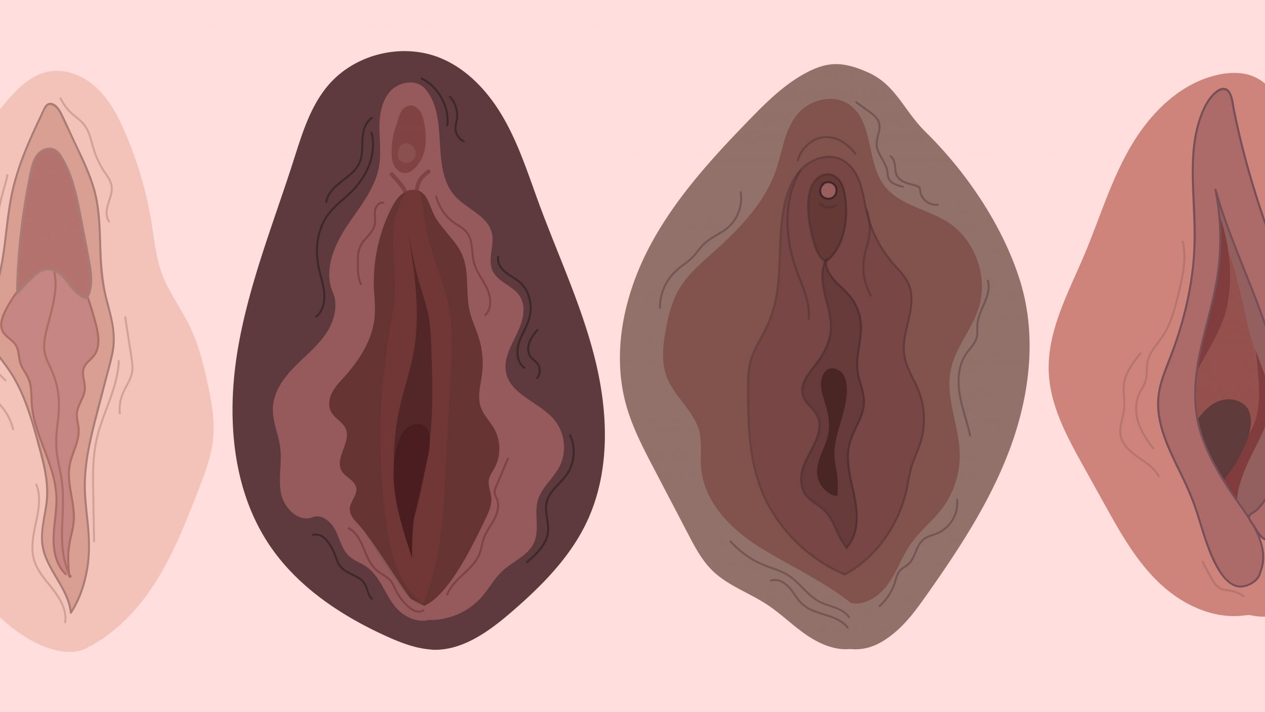 a variety of vulvas